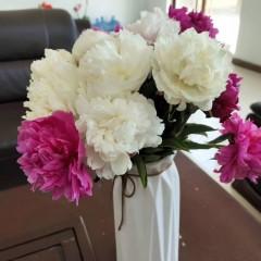 鲜花芍药、菏泽基地直发芍药鲜切花