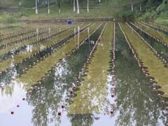 维也维山拥有完整产业链 提供整体水环境修复和生态建设解决方案