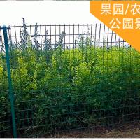 养殖场荷兰网/鸡场防止逃跑护栏网