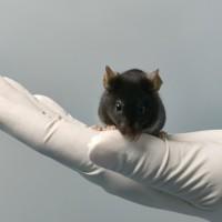 动物模型:肿瘤类/骨科类/心血管类